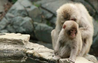 Main Bareng Monyet di Lembah Neraka? Beneran Ada Loh!