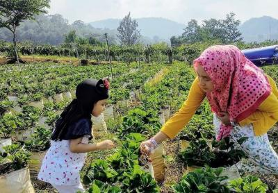 3 Desa di Pamekasan Ini Tawarkan Agrowisata, Apa Kelebihannya?