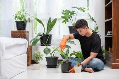 Ketahui Hal Ini agar Tanaman Hias Tumbuh Subur dan Tak Cepat Layu