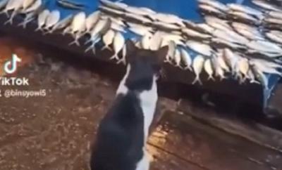 Viral Kucing Sopan, Sabar Menunggu di Depan Lapak Penjual Ikan