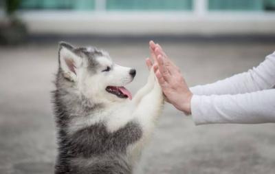 Kisah Haru Anjing K9 Temani Pemiliknya Berjuang Lawan Kanker, Akhirnya Dikubur Bersama