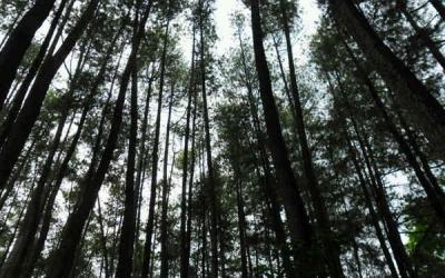 Jokowi Ingin Hutan Sosial Dikelola Langsung Masyarakat, Begini Pelaksanaannya
