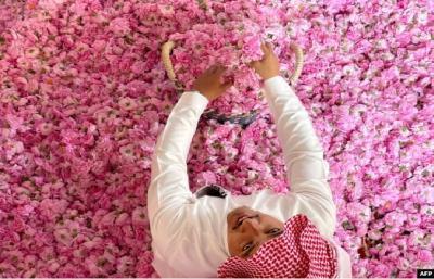 Bulan Ramadhan dan 300 Juta Mawar Merah di Kota Taif Arab Saudi
