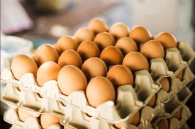 Tips Membeli Telur Segar agar Sehat Dikonsumsi