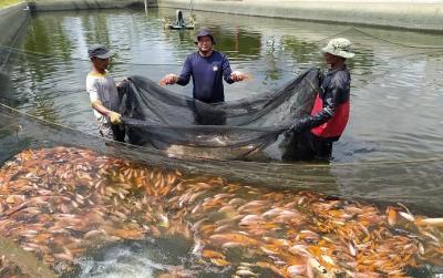 Kisah Polisi Raup Ratusan Juta dari Budidaya Ikan Nila