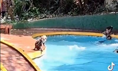 Viral Monyet Pakai Fasilitas Hotel yang Sepi, Warganet: Nikmati Hidup Nyet!