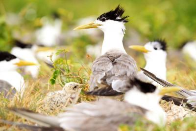 Pengemudi Misterius Tabrak Kawanan Burung Dilindungi di Pantai, Belasan Ekor Mati