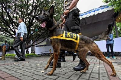 Polisi Terjunkan Anjing Pelacak Kejar Pelaku Perampokan & Pemerkosaan di Bekasi