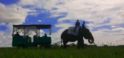 Alasan Pusat Latihan Gajah Way Kambas Belum Dibuka untuk Wisata