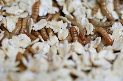 Restoran Ini Sajikan Makanan dari Ulat hingga Serangga, Berani Coba?