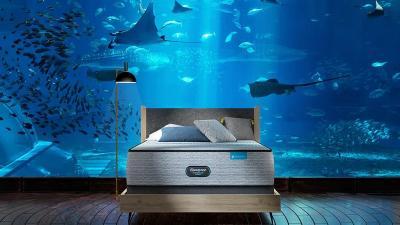 Menariknya Akuarium Long Island, Tawarkan Tidur Dengan Ikan-Ikan Hidup