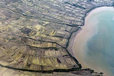 9 Juta Hektare Lahan Diamankan Negara, Separuhnya Kawasan Hutan