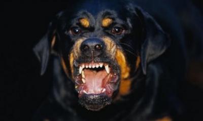 Berikut Deretan Kasus Anjing Menyerang Manusia