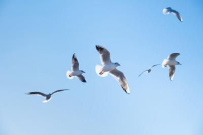 Alquran dan Sains Beberkan Penyebab Burung Mampu Terus Melayang di Angkasa