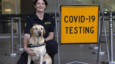 Bandara Ini Pekerjakan Anjing Pendeteksi Covid-19