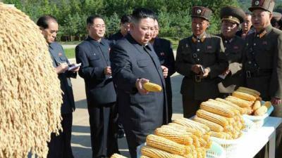 Korea Utara Alami Krisis Pangan, Harga Jagung Naik Gila-gilaan
