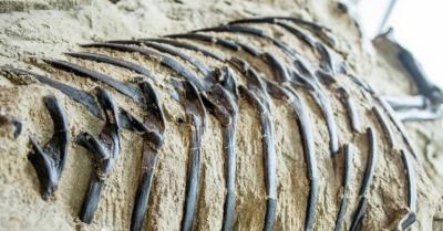 Fosil Badak Raksasa Seberat 20 Ton Ditemukan di China