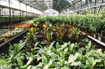 Alquran dan Sains Beberkan Fungsi serta Manfaat Tumbuhan di Muka Bumi