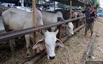 Intip Kisaran Harga Hewan Kurban 2021, Mulai Domba hingga Sapi