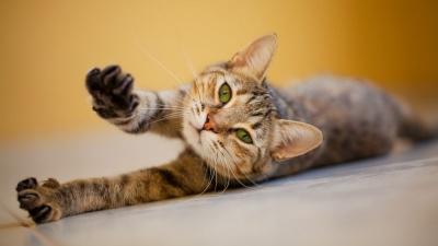 Kenali Manfaat Memijat Kucing Peliharaan