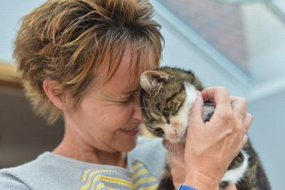Alasan Kucing Gemar Memijat Tuannya