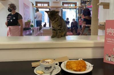 Dear Cat Lovers, Nongkrong di Kafe Ini Bisa Santai Bareng Kucing