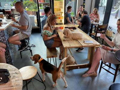 Datang ke Bar Ini, Anjing Bisa Minum-Minum dan Menggonggong Sepuasnya