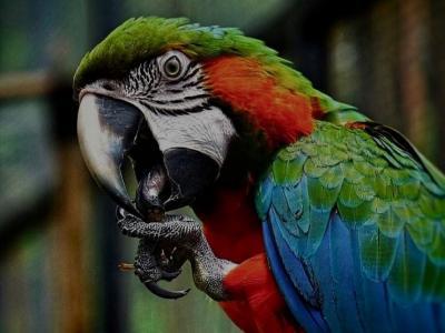 Kisah Owner Wisata Jual Burung Rp2 Miliar Buat Gaji Karyawan