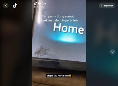 Unik, Gerombolan Semut Masuk TV Mendadak Viral di Medsos