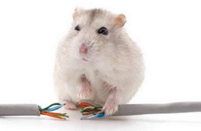 Tikus Makan Kabel Mobil Listrik Tesla, Wanita Rugi Rp 72,4 Juta