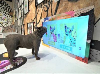 Unik! Ada Eksibisi Karya Seni untuk Anjing di Hong Kong, Begini Keseruannya