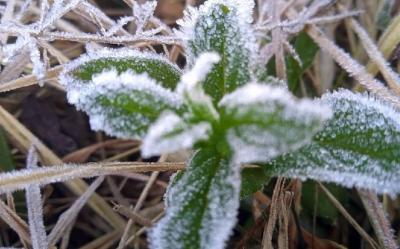 Fenomena Salju Bromo Kian Indah, Sayang Tak Bisa Dinikmati Pelancong