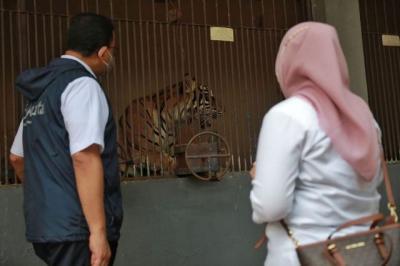 2 Harimau di Ragunan Terinfeksi Covid-19, Pemilik Hewan Diimbau Tidak Panik