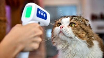 9 Tanda Kucing Peliharaan Terinfeksi Covid-19