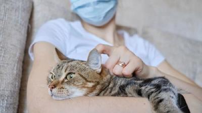 3 Tips Cegah Kucing Peliharaan Terinfeksi Covid-19