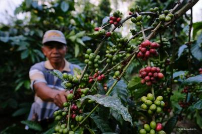 Pertanian Berkontribusi Besar pada Pertumbuhan Ekonomi, Mentan: Semangat Tani Kita