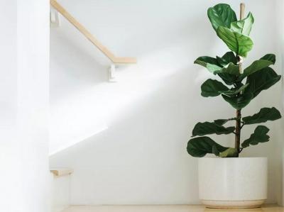 5 Tanaman yang Bikin Rumah Nyaman dan Berwarna