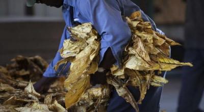 Mengenal Asal Mula Tembakau, di Indonesia Populer Dijual Roro Mendut