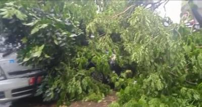 Hujan Angin, Pohon Tumbang Timpa 2 Mobil Jenazah di Tangsel