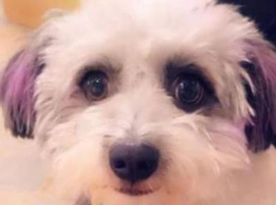 3 Pekan Hilang di Bandara, Anjing Snoopy Akhirnya Ditemukan