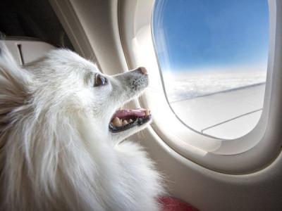 Sultan, Pria Ini Booking Seluruh Kabin Kelas Bisnis Pesawat Agar Anjingnya Bisa Liburan