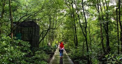 7 Wisata Hutan Mangrove di Indonesia, dari Pesisir Jakarta hingga Kalimantan