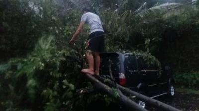 Imbas Pohon Tumbang, KRL Jakarta Kota-Bogor Hanya Sampai Stasiun Depok