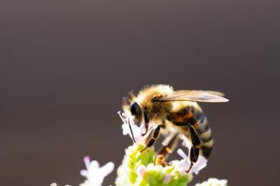 Alquran dan Sains Ungkap Keistimewaan Lebah, Bisa Obati Berbagai Penyakit