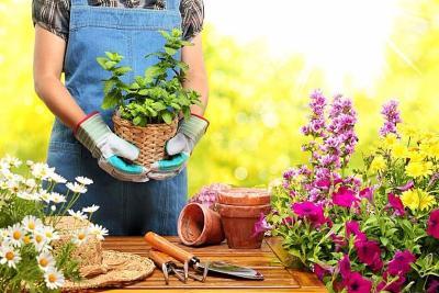 Bukan Melati, Ini 3 Bunga yang Bisa Dimakan untuk Kesehatan