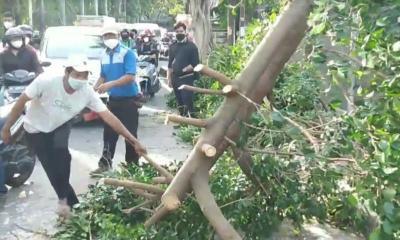 Pohon Beringin Tumbang Tutup Jalan di Duren Sawit