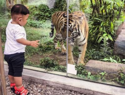 Duh! Kebun Binatang Ini Tolak Ratusan Pengunjung dalam Sehari karena Bawa Anak Kecil