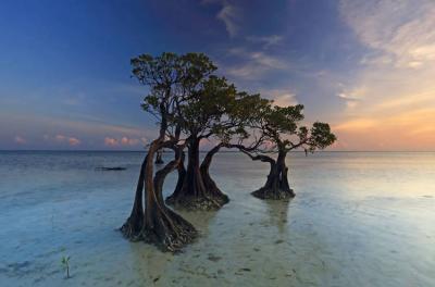 Uniknya Pohon Bakau Menari di Sumba, Spot Foto Favorit Turis Mancanegara