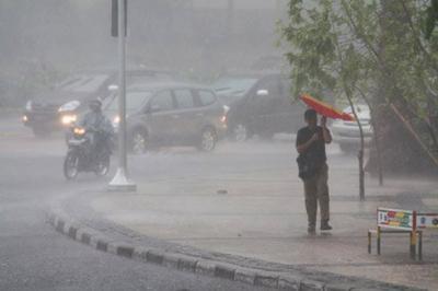 Depok Kembali Hujan Badai, Sejumlah Pohon Bertumbangan