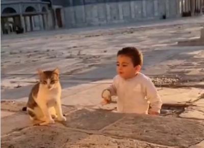 Viral Balita Palestina Berbagi Sarapan dengan Kucing di Masjidil Aqsa, Netizen pun Terharu